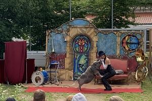 Piglet Circus